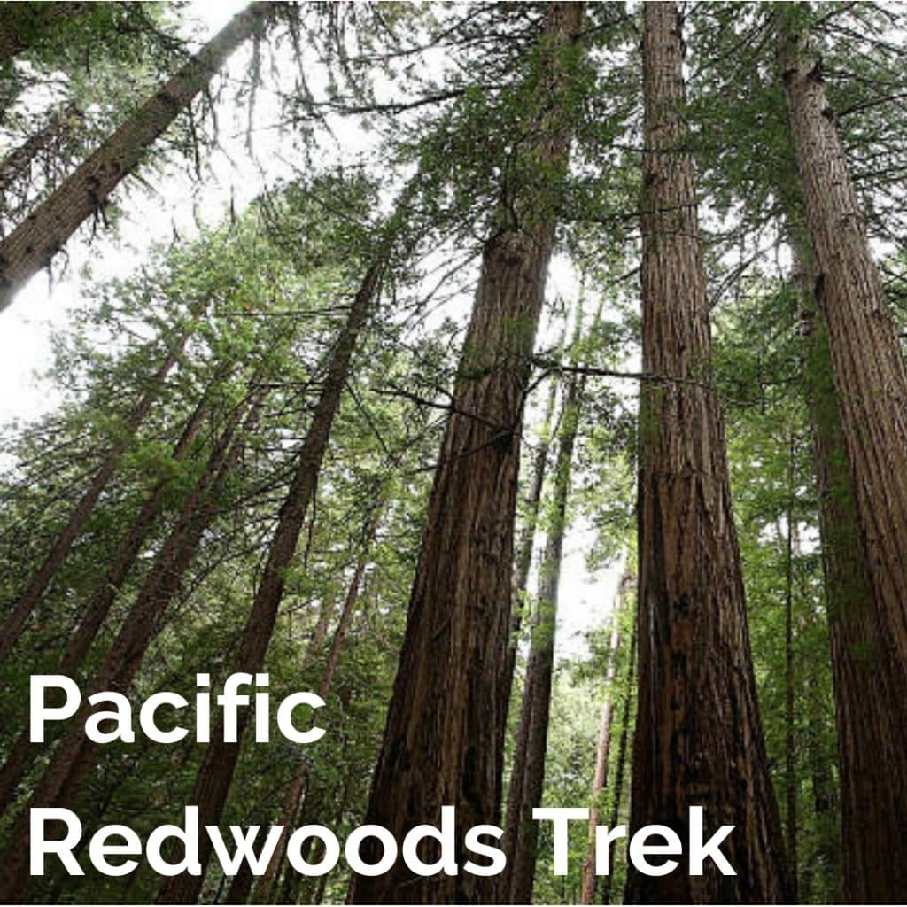 Pacific Redwoods Trek, teen bicycle summer camp